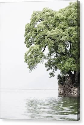 Tree Next To A Lake Canvas Print