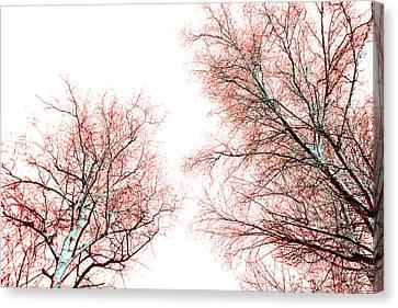 Tree Canvas Print by Nina Peterka