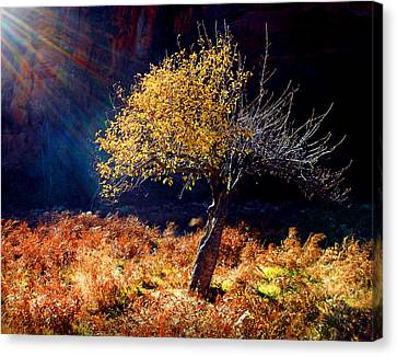Tree Number 1 Canvas Print by Peter Cutler