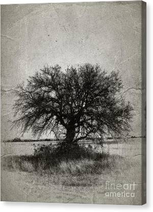 Tree Of Life - No.1958v Canvas Print by Joe Finney