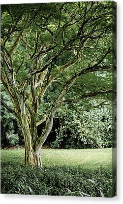 Tree Of Life Canvas Print by Debbie Karnes