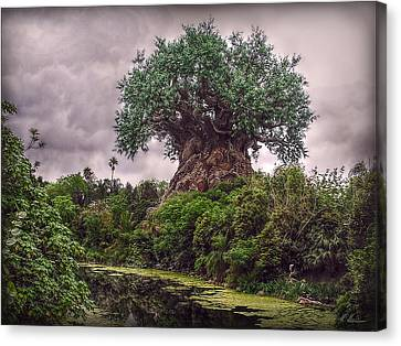 Canvas Print featuring the photograph Tree Of Life by Hanny Heim