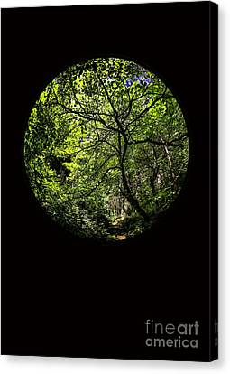 Tree Of Life II Canvas Print by Holly Martin
