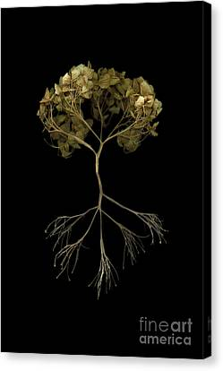 Tree Of Life Canvas Print by Tim Kravel