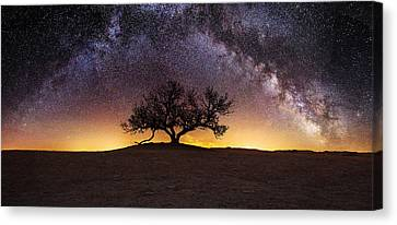 Ancient Canvas Print - Tree Of Wisdom by Aaron J Groen
