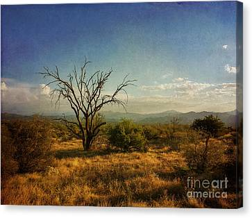 Tree On Caballo Trail Canvas Print