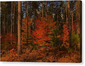 Canvas Print featuring the photograph Tree On Fire by Michaela Preston