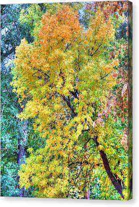 Canvas Print featuring the photograph Tree On Fountain Creek by Lanita Williams