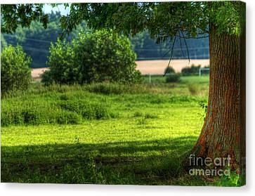 Tree On Summer Field Canvas Print by Michal Bednarek