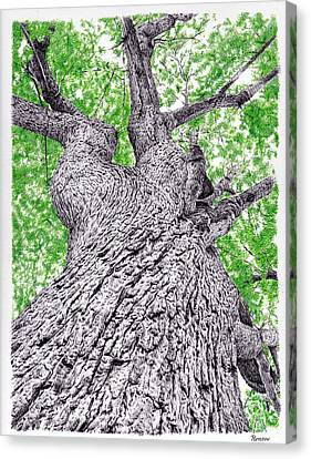 Tree Pen Drawing 4 Canvas Print