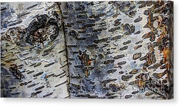 Tree People Canvas Print by Heidi Smith