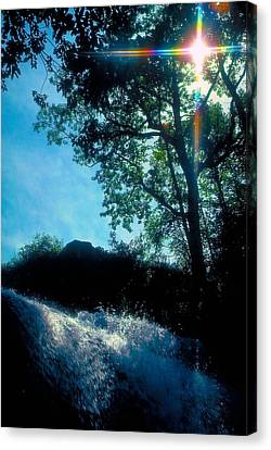 Tree Planted By Streams Of Water Canvas Print by Marie Hicks