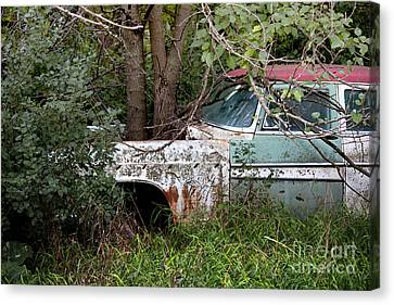 Tree-powered Desoto Canvas Print by Rebecca Davis