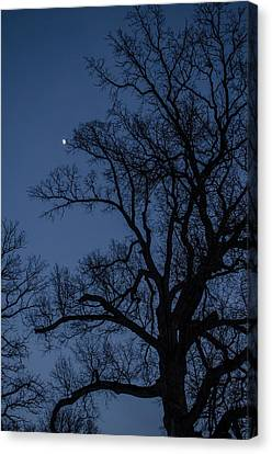 Tree Reaching For The Moon Canvas Print