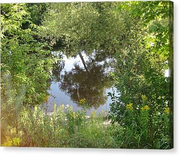 Tree Reflection Canvas Print by Carolyn Reinhart