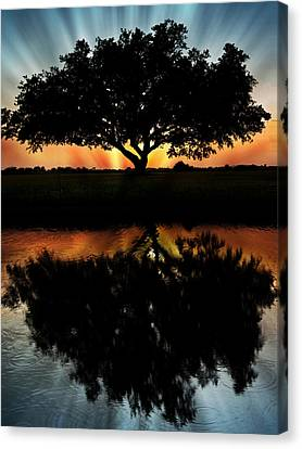 Tree Reflection Canvas Print by Regina  Williams