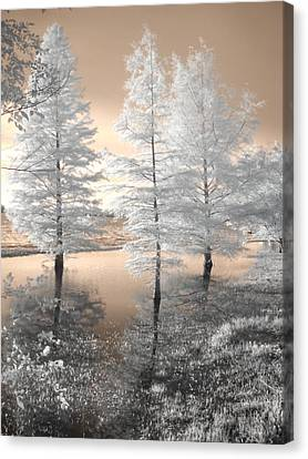 Tree Reflections Canvas Print by Jane Linders