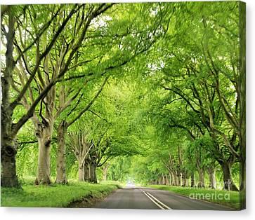Tree Avenue Canvas Print