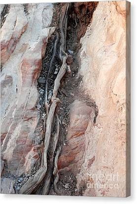 Tree Root Embedded Canvas Print