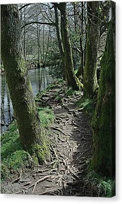 Canvas Print - Tree Route Pathway by Kathy Spall
