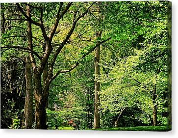Canvas Print featuring the photograph Tree Series 3 by Elf Evans