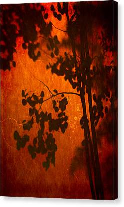 Tree Shadow On Fiery Wall Canvas Print