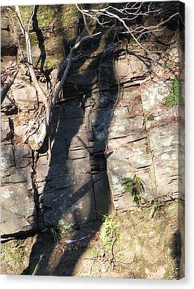 Tree Shadows Canvas Print by Melissa Stoudt