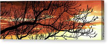 Tree Silhouette At Sunset, Warner Canvas Print