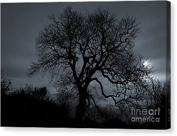 Tree Silhouette Canvas Print by Ian Mitchell