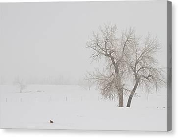 Tree Snow Fog And The Prairie Dog Canvas Print