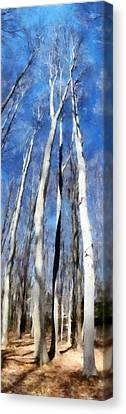 Tree Stand In Early Spring Canvas Print by Michelle Calkins