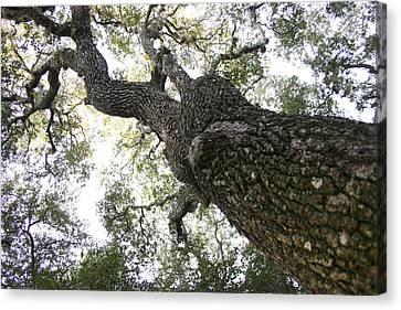 Tree Still Canvas Print