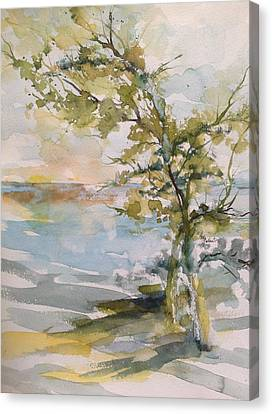 Tree Study Canvas Print by Robin Miller-Bookhout