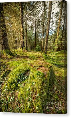 Tree Stump Canvas Print by Adrian Evans