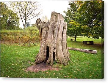 Tree Stump Canvas Print by Tom Gowanlock