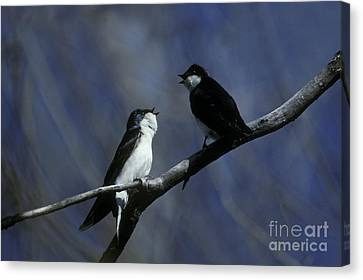 Tree Swallows Canvas Print