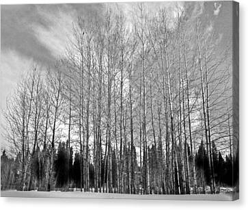 Canvas Print featuring the photograph Tree Sweep by Tarey Potter