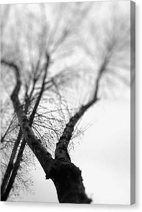 Tree Canvas Print by Taylan Apukovska
