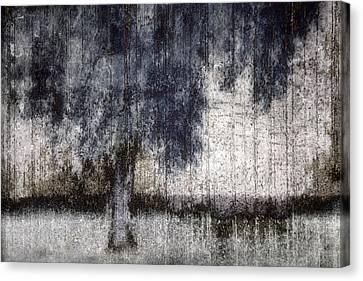 Tree Through Sheer Curtains Canvas Print by Carol Leigh