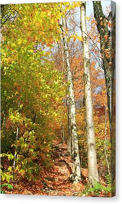 Canvas Print featuring the photograph Tree Trail by Alicia Knust