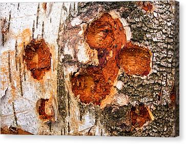 Tree Trunk Closeup - Wooden Structure Canvas Print by Matthias Hauser