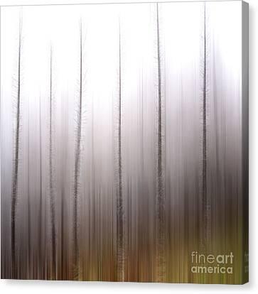 Tree Trunks Canvas Print by Bernard Jaubert