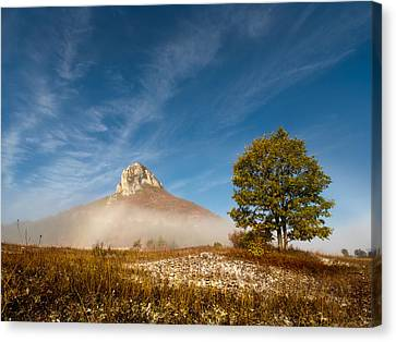 Tree Under The Hill Canvas Print by Davorin Mance