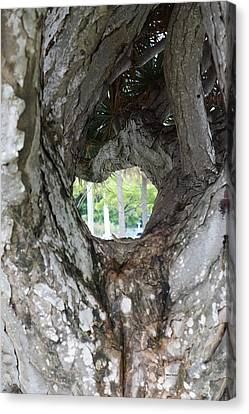 Canvas Print featuring the photograph Tree View by Rafael Salazar