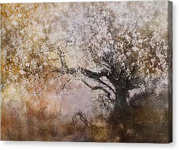 Tree Whispers Canvas Print by Amy Weiss