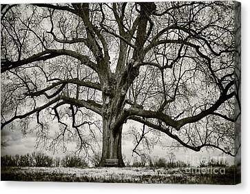 Tree With Bench Canvas Print by Greg Ahrens