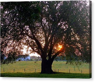 Tree With Fence. Canvas Print