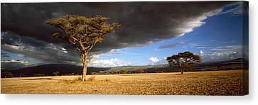 Tree W\storm Clouds Tanzania Canvas Print by Panoramic Images