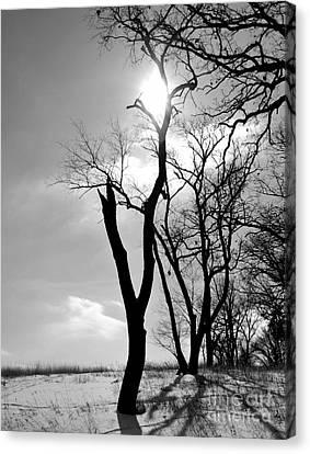 Tree3 Canvas Print