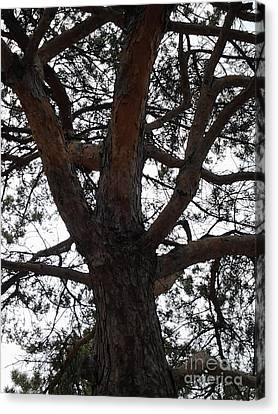 Tree4 Canvas Print by Susan Townsend